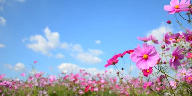 Ilustrasi musim semi