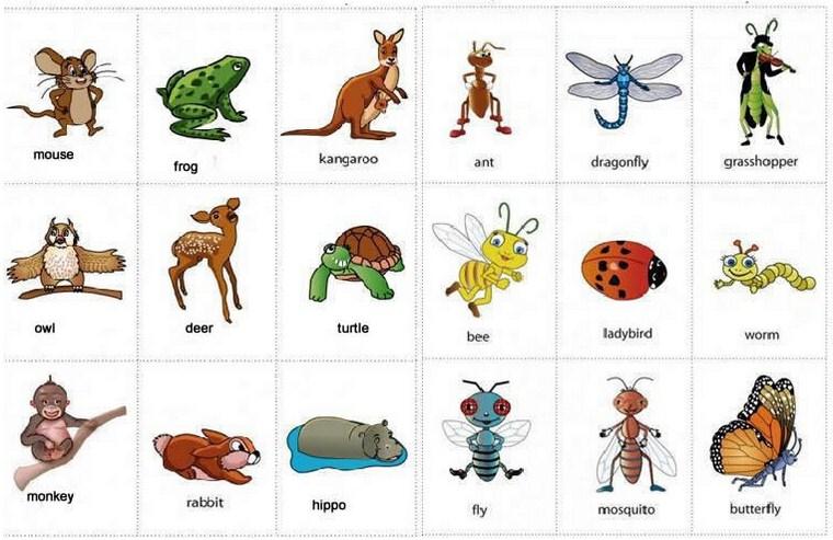 Gambar nama binatang