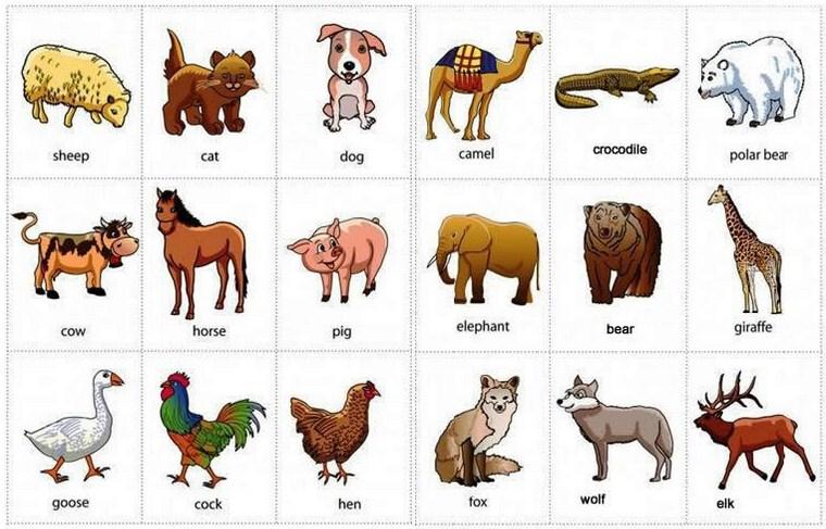Gambar nama hewan