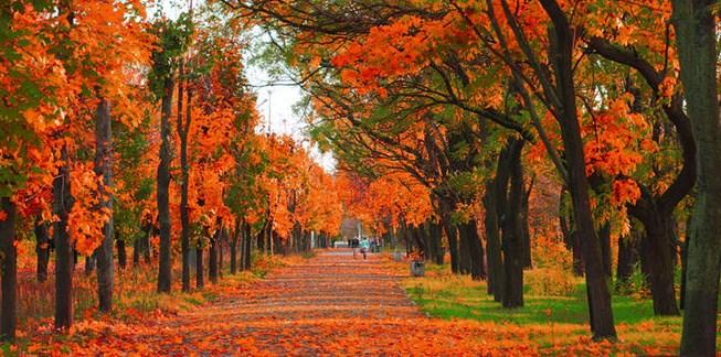Ilustrasi musim gugur